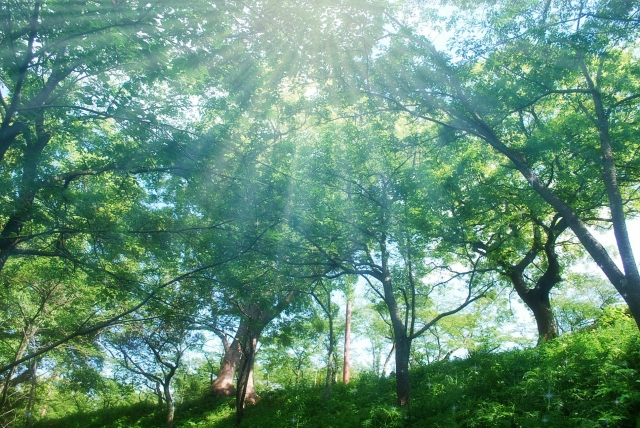 inouekiki_20120501